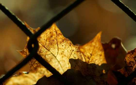 осень, природа Фон № 27661 разрешение 2560x1600