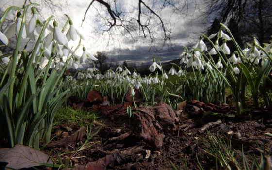 подснежники, цветы, весна Фон № 56383 разрешение 2560x1600