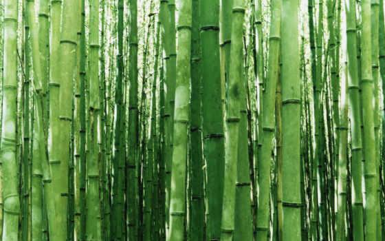 бамбук, япония, miscellaneous, arashiyama, заставки, our,