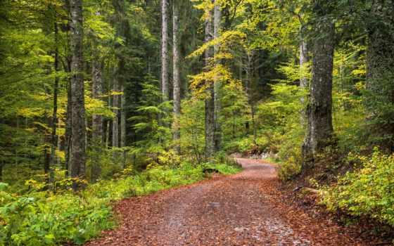 природа, canvas, дорога, лес, few, days, германия, другие, photos,