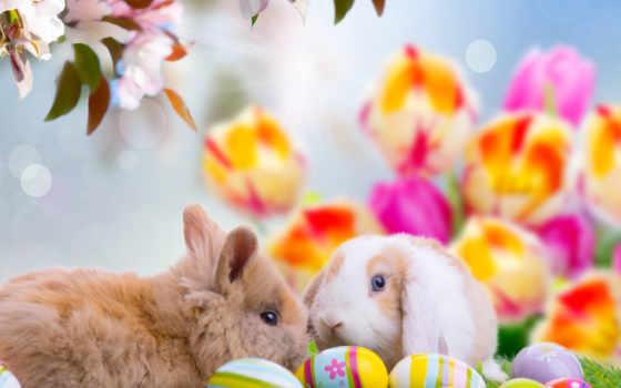 easter, яйца, пасхальные, кролики, happy, праздник, cvety, branch, oboi, живые,