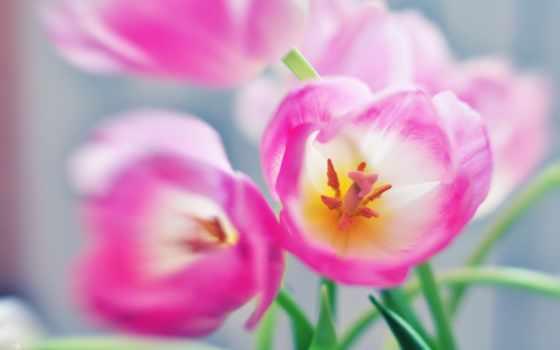 цветы, тюльпаны Фон № 19462 разрешение 2560x1600