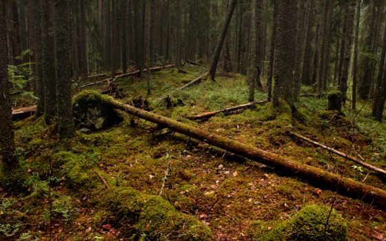 лесу, деревья