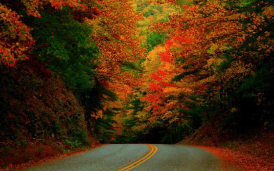 osen, октябрь, дорога, les, karolina, деревя, листья, priroda,