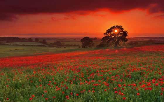 поле, маковое, windows, закат, красивые, margin, стиле,