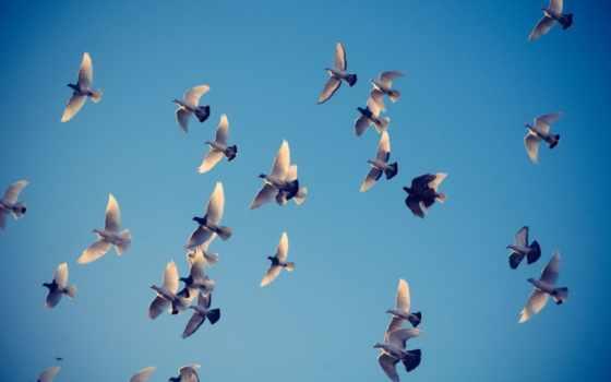небо, голуби