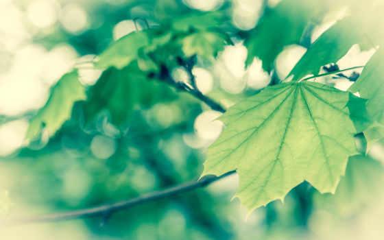 весна, широкоформатные, нояб