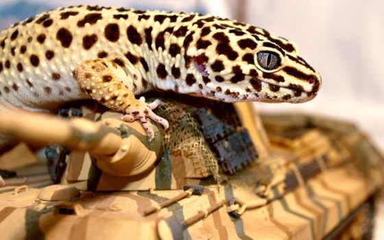 gecko, ящер, эублефар, глаз, танк,