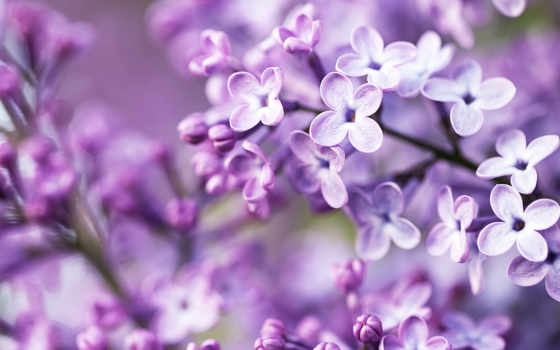 flowers, purple, white