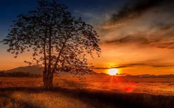 malaysia, дерево, закат