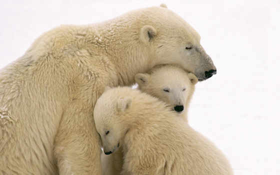 love, pinterest, familia, amo, ми, об, polar, ideas, mom,