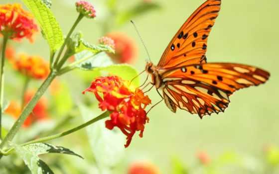 бабочка, бабочки, весна, flowers, цветке, igorvagner, траве, трогательных,