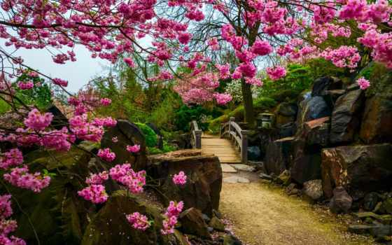 garden, Сакура, красивый, цветение, japanese, весна