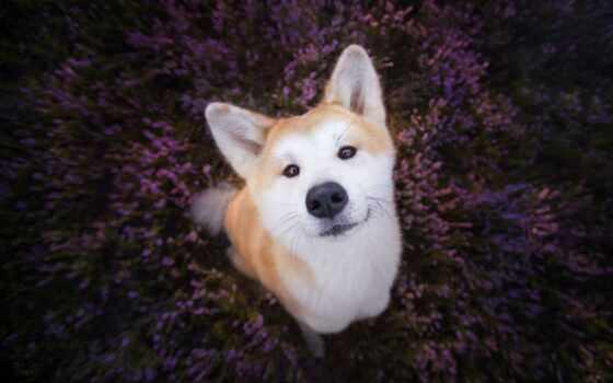 cute, animal, funny, рюкзак, щенок, собака