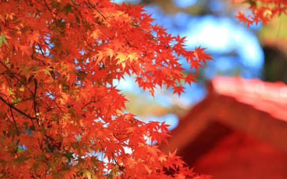 осень, лист, золотистый, красное