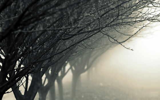 raindrop, дождь, drop, туман, upload, favorite, ton, дерево, awesome, также