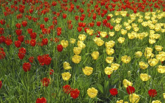 обои, обоев, цветы, quot, красивые, год, новый,