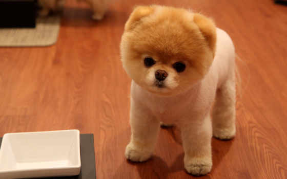 собака, cute, little, пушистая, маленькая, dogs, nice, собачки, puppies, маленькой,