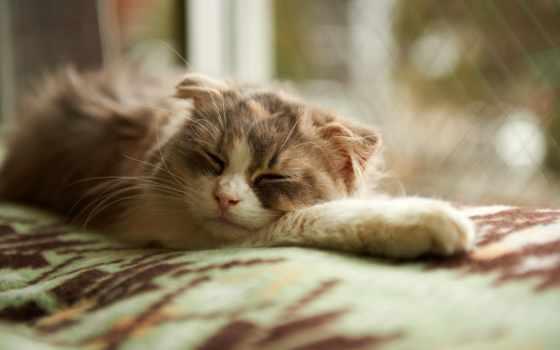 спит, одеяло, кот, окно, спать, котенок, sun,