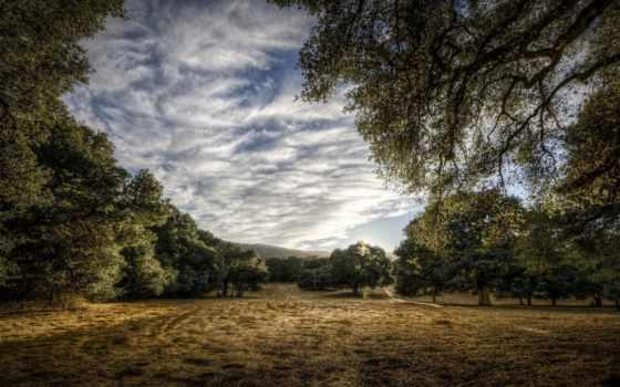 montezemolo, небо, лес