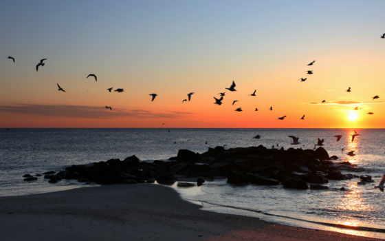 птицы, закат, пейзажи -, море, небе, fone, со, заката, природа, парящие,