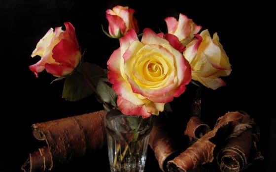розы, цветы, стакане, букет, glass, bundle, стеклянном, кора, дек, мар, разрешениях,
