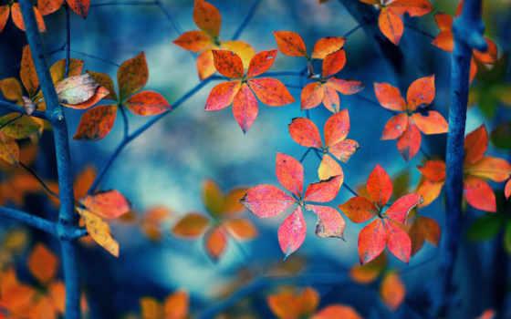осень, квіти, шпалери, заставки, природа, stil, листья, робочий, flowers, cvety,