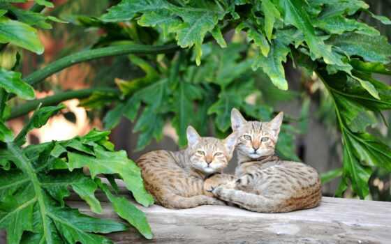 коты, steam, лист, монитор, кот, зелёный, ультраширокий, два, отдых, зеленое