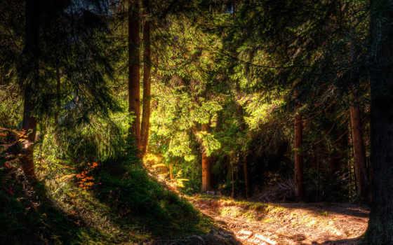 les, priroda