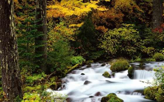 река, rivers, world, лес, national, size, oregon, изображение, mount, pictures,