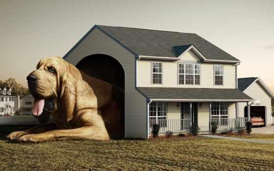 собака, за, maintenance, dome, дома, кошками, частного, собаку, большая, собаки,
