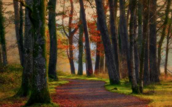 лес, живопись, natural, коллекция, фото, листья,