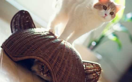 torode, кошки, бен, daisy, корзина, benjamin, hannah, кот, прячется, iphone,