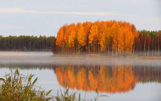 коллекция, лес, осень, яndex, дневник, стих, рамочки, коллекциях, рамочках,