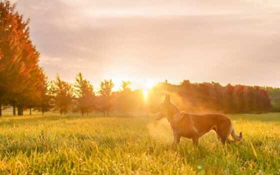 free, kartinika, овчарка, лес, лебедь, закат, магазин, трава, интернет, sunlight