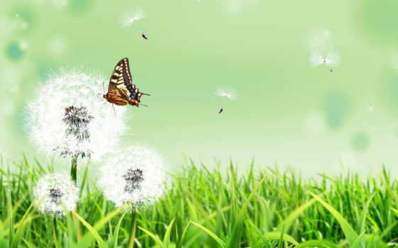 природа, трава