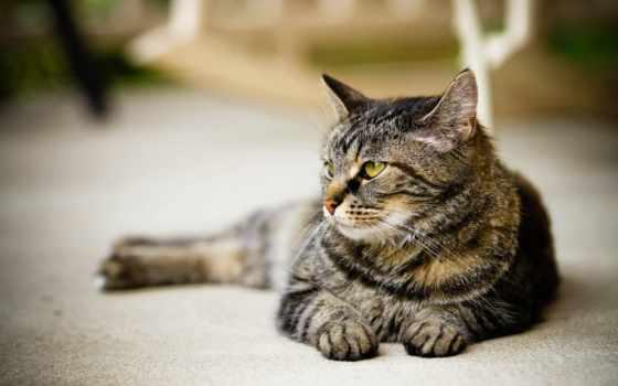 кошки, взгляд, кот