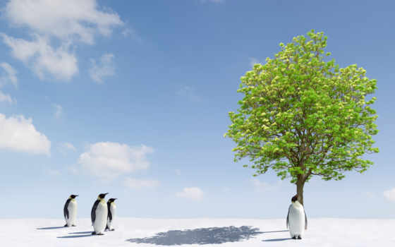 пингвины, zhivotnye, снег