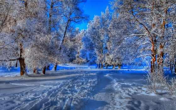 лес, winter, зимнем, лесу, коллекция, большая, самая, закачки, trail,