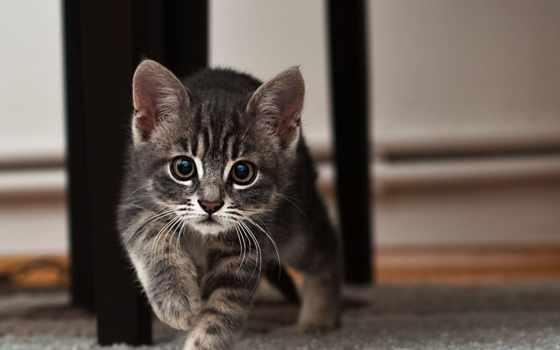 zhivotnye, кошки, кот, красивые, страница, природа, взгляд, яркие, живые, котенок,