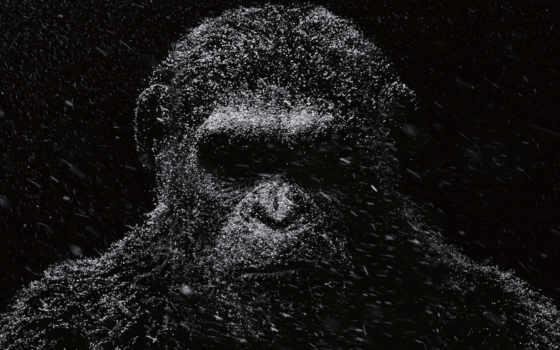apes, planet, war, caesar, movies, teaser,