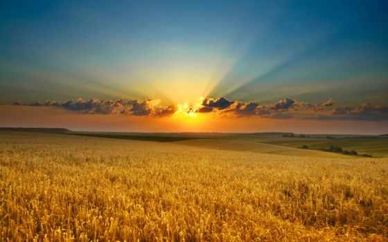 природа, поле, рассвет, oblaka, закат, колосья, sun, красавица, rays, gold,