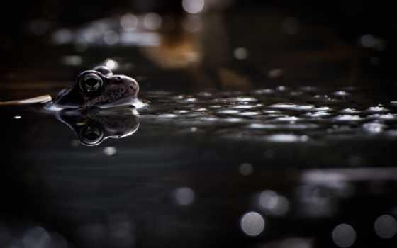 лягушка, water,