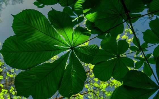 branch, макро, февр, high, природа, pinterest, pin,