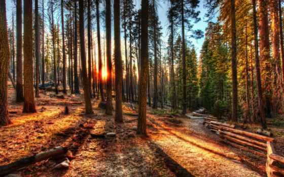 деревья, лес Фон № 8292 разрешение 2582x1600