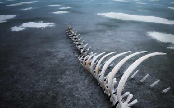 кости, скелет, лед, bones,