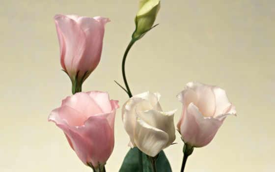 цветы, разрешения, высокого