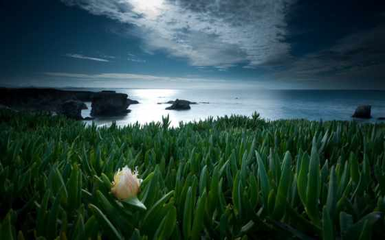 одинокий, цветы, природа