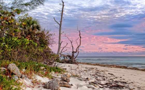 пальмы, песок, море Фон № 79626 разрешение 2560x1600