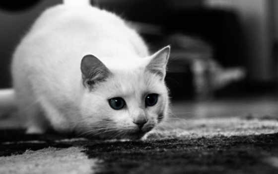 кот, белая, свет